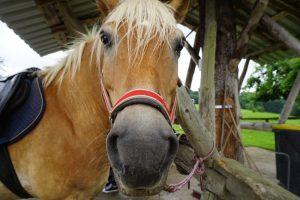 Bauernhofurlaub mit Pferd